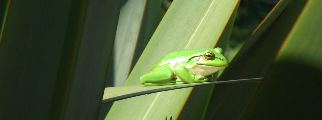 Frog in sun like a great blog